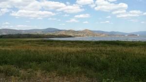 Vegetáciou zarastený bývalý breh Šíravy. Foto: MS
